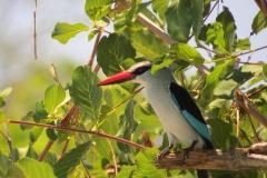 birds of umoja