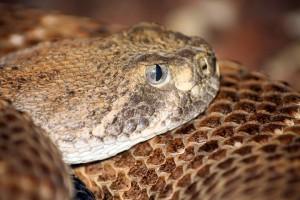 reptile-center2